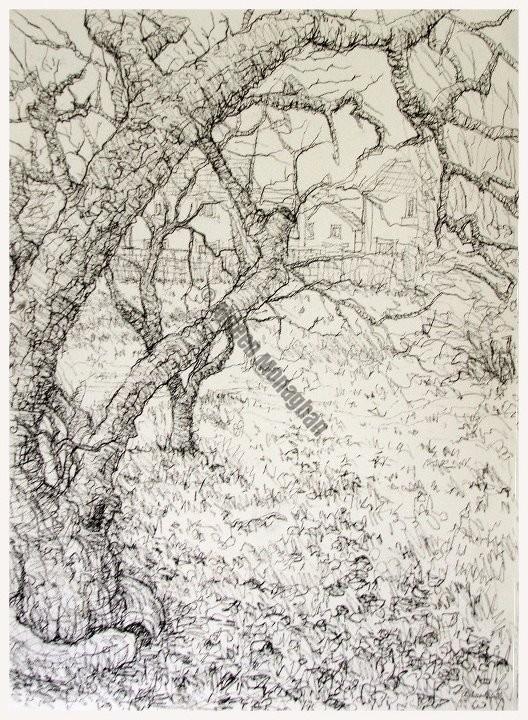 Ballygaddy apple trees, ink on paper, 32cm x 40cm, 2005