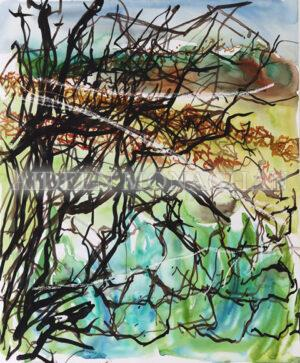 Aran Islands Blackthorn