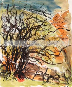 Fairy Tree Connemara